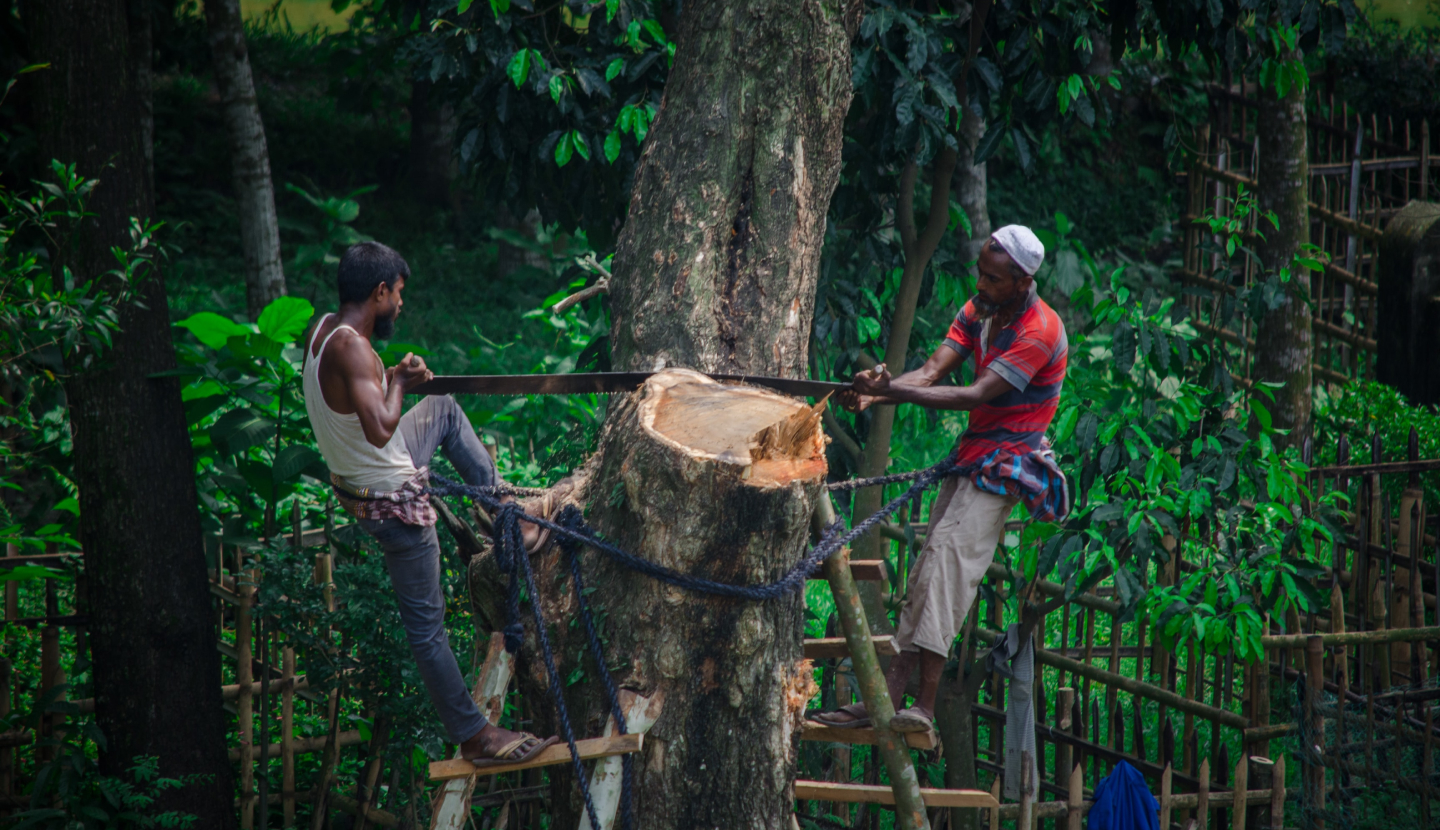 Chinese companies urged to tackle deforestation risks across palm oil value chains